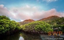 Mangrove Lagoon CH-00003