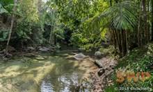 Tropical Pool CH-00005