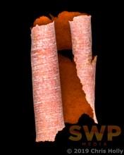 Paperbark Scroll 1, Australian Elements Ch-0043