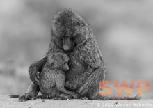 Mother & Child Reunion, monochrome WO-1215M