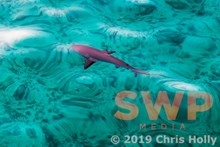 Reef Hunter CH-00019