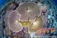 Coral 360 WO-0847