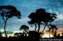 Cloudforest Sundown HB-11