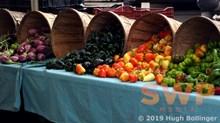 Fresh veggies HB-25a