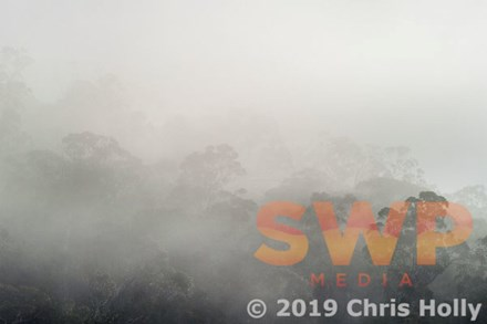 Misty Morning CH-00061