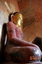 Burma Buddha Coop-3