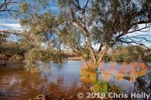 Aussie Creek CH-00043b