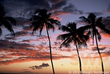 Sunset Palms HB-RC8